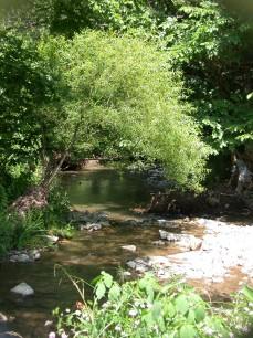 Rock Camp Creek